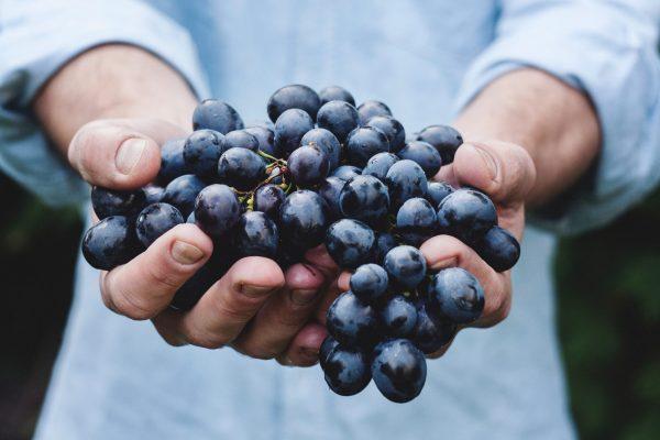 Tony Likes Grapes